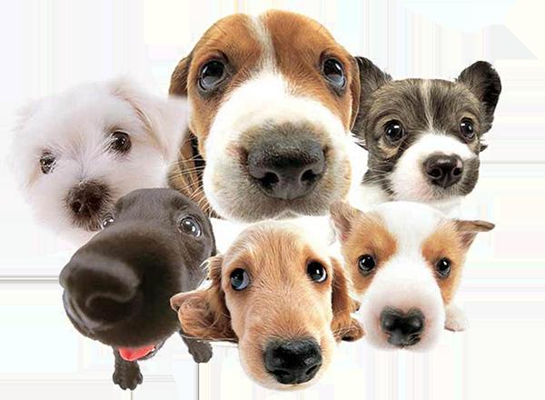 dog-food-main