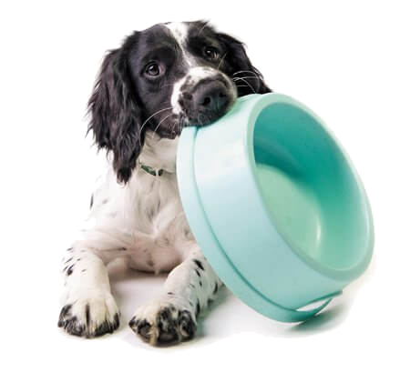 dog-w-bowl